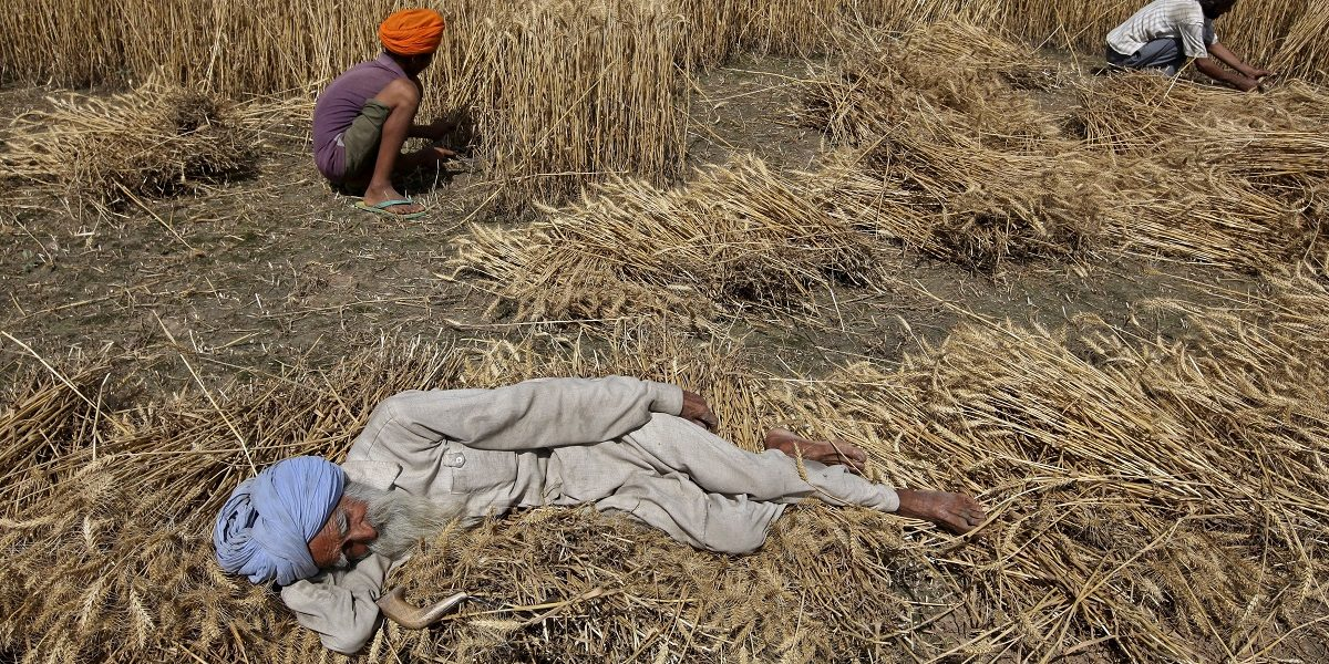 thewire.in - Pukhraj Singh - The Farm Law Protests Could Whitewash the Blatant Inequality of Rural Punjab